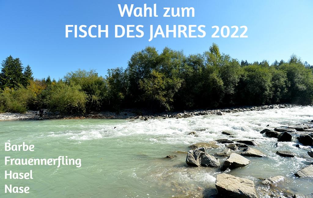 Wählen Sie den Fisch des Jahres 2022